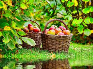 TR Best Wallpaper Fruits (004)