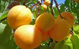 TR Best Wallpaper Fruits (030)
