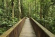 Daintree National Park, Australia --- Boardwalk through Rainforest, Daintree National Park, Queensland, Australia --- Image by © Radius Images/Corbis